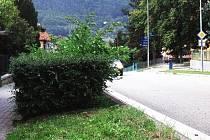 Přerostlé keře v ulici Sadová v Blansku bráním řidičům ve výhledu na silnici.