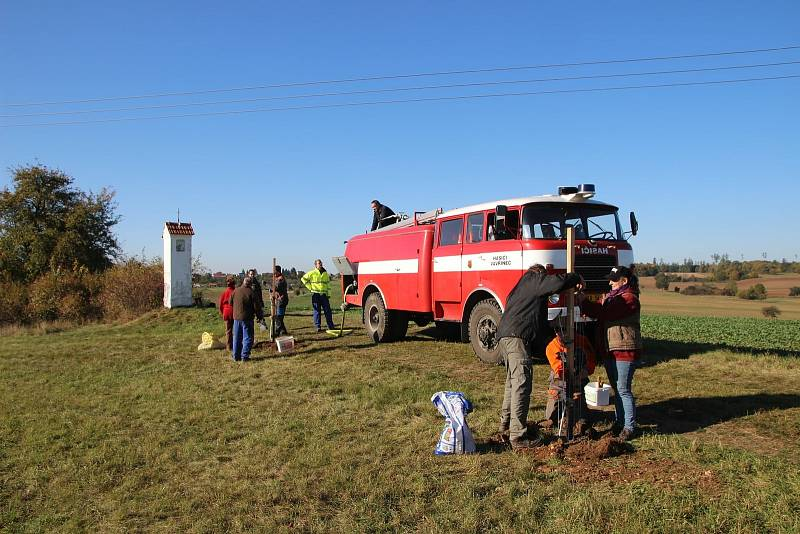 Dobrovolníci vysadili mezi Vavřincem a Sloupem v Moravském krasu padesát oskeruší.