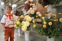 Moravské kartografické centrum ve Velkých Opatovicích o víkendu rozzářily květy jiřin. Návštěvníci v sobotu i v neděli viděli mezi mapami a měřicími přístroji na tři sta různých druhů těchto květin pozdního léta v asi čtyři sta padesáti vazbách.