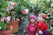 Zámecké skleníky v Rájci-Jestřebí lákají na rozkvelé kamélie. Až do konce března.