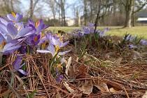 Zámecký park ve Velkých Opatovicích září jarními květy.