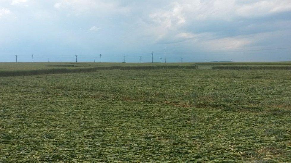 Obrazec v poli pšenice se objevil o víkendu severně od Boskovic.