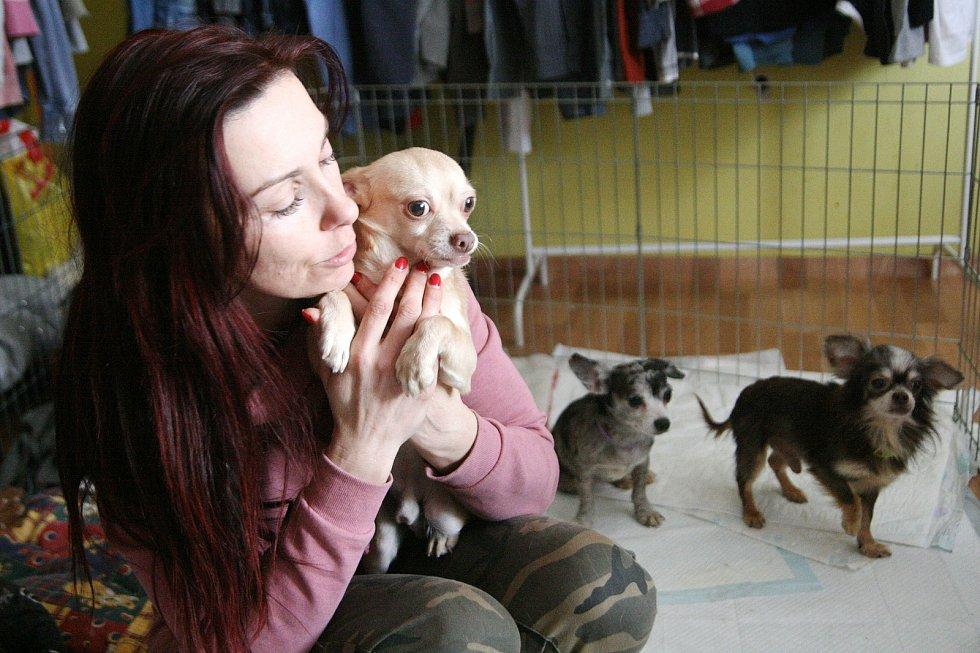 """V hospici pro staré, týrané a handicapované psy v Bukovince se starají i o zubožená zvířata nalezené u chovatelky v Kamenici nad Lípou. Pojmenovali je Kameňáčci. Do Bukovinky přichází finanční i materiální pomoc z celé republiky. """"Je hrozně moc lidí, kteř"""