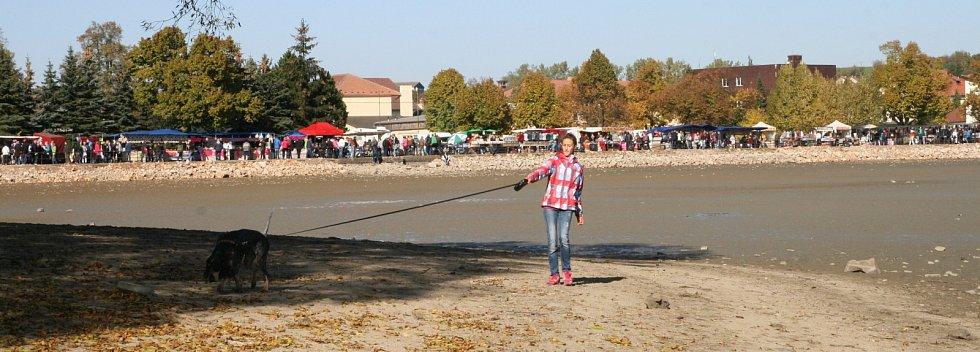 Rybáři vylovili jedovnický rybník Olšovec. V síti uvízl i sumec albín.