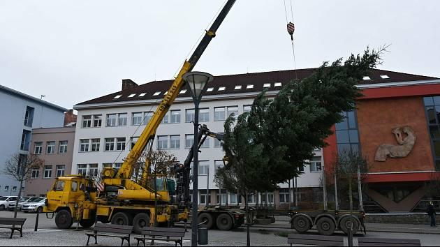 Advent je za dveřmi. Těžká technika už dovezla na blanenské náměstí Republiky tradiční vánoční strom. Letos je to třináctimetrová jedle bělokorá, kterou lesníci pokáceli poblíž Rudice.