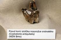 Za doprovodu cimbálové muziky Zádruha Muzeum Blansko v pátek slavnostně otevřelo tři nové stálé expozice.