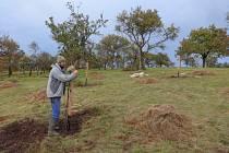V Moravském krasu přibyly další ovocné stromy.