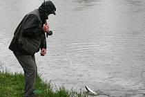 Rybáři se chystají na pstruhovou sezonu.