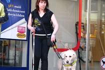Na Wanklově náměstí v Blansku se v pátek sešlo devatenáct nevidomých soutěžících z celé republiky. Ti měli za úkol společně se psy projít předem určenou trasu vedoucí centrem města.