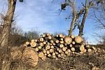 Od loňského května obnovují Podivínští vegetaci v okolí města. Mimo jiné vysadí více než osm stovek stromů.