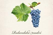 Nový nástěnný kalendář, ve kterém přibližuje odrůdy hroznů, vytvořilo Národní vinařské centrum ve Valticích.