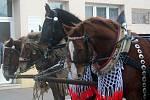 Tradiční žehnání koní v Lanžhotě.