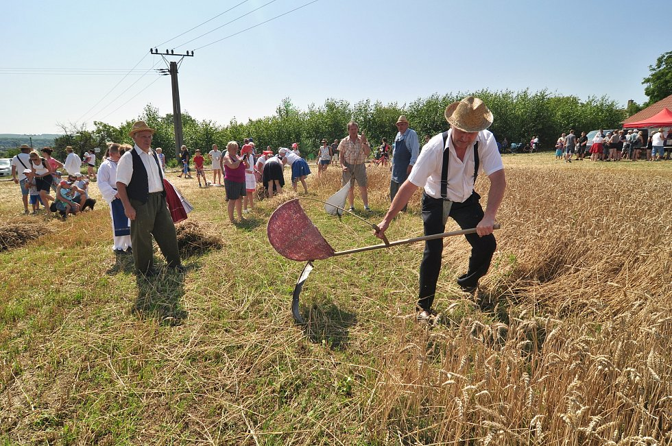 Historické žně v Drnholci na Břeclavsku pořádají místní nadšenci a sdružení Bacchus. Připomínají si tak práci předků.