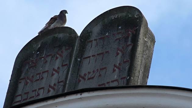 Holubi a další ptáci působí škody na památkách. Nevyhýbají se například ani břeclavské synagoze.