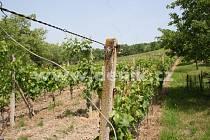 Vinice v Mikulově, kde měl Jiří Adam nutit důchodkyně kálet a močit do kbelíků, aby neznehodnotili hrozny. Jejich výkaly pak sloužily jako hnojivo do vinice.