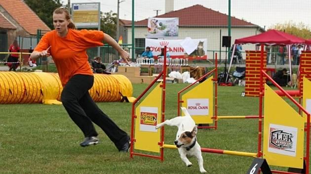 Agility klub Flying Paws pořádal v Sedleci neoficiální závody v agility pojmenované Královské tlapkování.