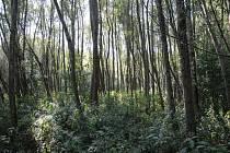 Lužní lesy. Ilustrační foto