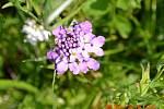 Kvetoucí pozdrav z Ostravy