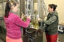 Ve sklepu vinařství Gotberg v Popicích na Břeclavsku se už plní lahve první várkou letošního vína. Jde o tradiční svatomartinské.