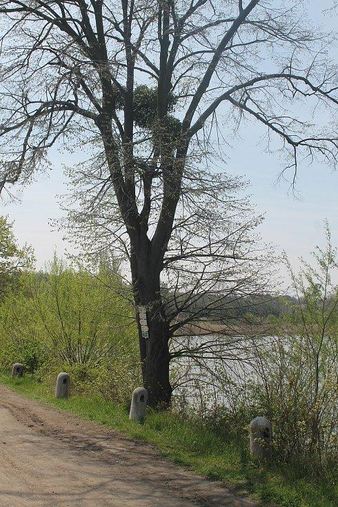 Vlak zastavuje také u rybníků poblíž Lednice. Mnozí výletníci směřují především sem.