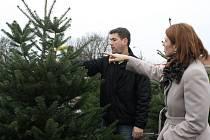 Na dvou místech v Břeclavi už zahájili prodej vánočních stromků. Nejvíce prodávánou zůstává stejně jako loni jedle.