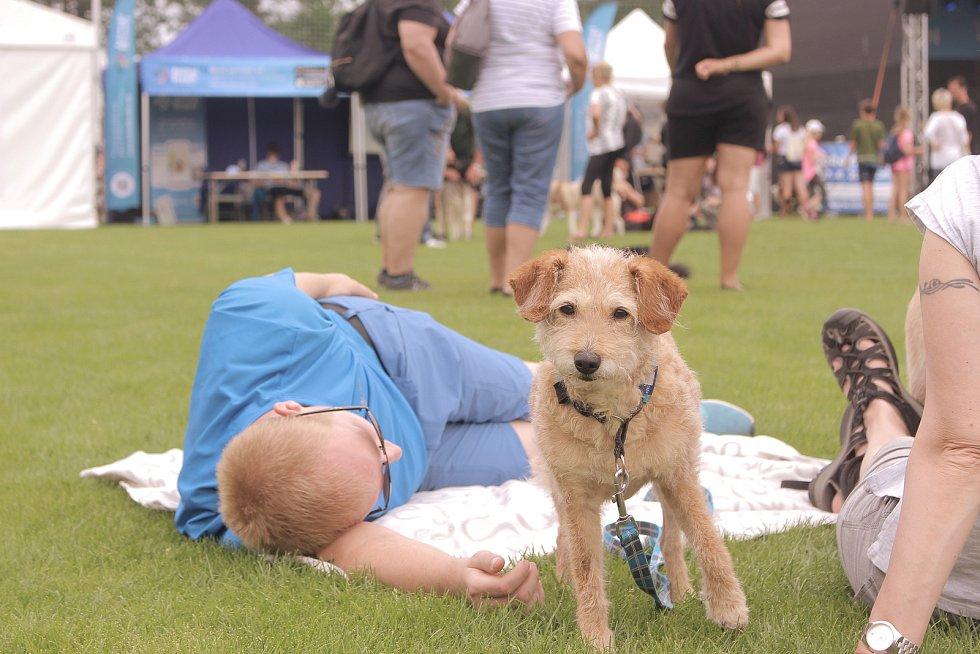 V Lanžhotě se konal Moravský psí den.