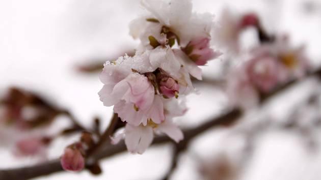 Lidé se s příchodem nového roku dočkali také prvních sněhových vloček letošní zimy.