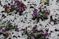 V Břeclavi a v okolí napadl na konci letošního roku první sníh. Vydržel však jen pár hodin a začal tát.