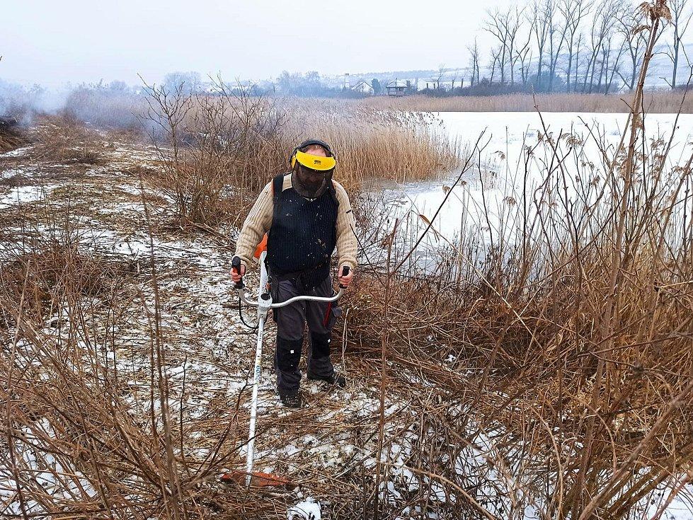 Ochránci přírody na ostrově na rybníce Nesyt pokosili rákos a pořezali keře, aby vytvořili lepší podmínky pro hnízdění ptáků.