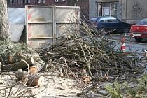 Březnový ořez stromů na Břeclavsku