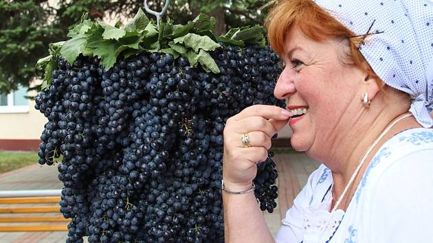 Ohlédnutí za letošním vinobraním ve Velkých Pavlovicích.