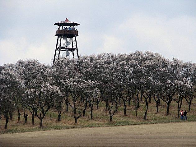 Otevření nové hustopečské rozhledny bylo spojené s premiérovou Slavností mandloní a vína.