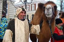 Dva velbloudi byli součástí pátečního tříkrálového průvodu v centru Břeclavi. Ten vyšel v půl čtvrté odpoledne od tamního gymnázia a zamířil odtud na prostranství ke kulturnímu domu Delta.