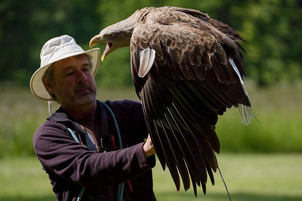 Jiří Hrotek s orlem. Letové ukázky dravců se vrátily do zámeckého parku v Lednici na Břeclavsku. Společnost Zayferus vznikla před 30 lety.