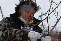 Třináctý ročník mistrovství v řezu révy vinné ovládly ve Valticích ženy.