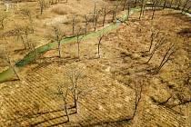 Osamocené stromy, které po těžbě na pasekách na Soutoku zůstanou, se mohou stát aspoň dočasným domovem pro vzácné a ohrožené druhy hmyzu.