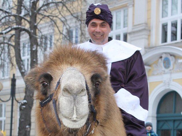 Při letošním tříkrálovém průvodu městem se na velblouda posadil břeclavský starosta Pavel Dominik. Podobnou fotografii okomentovala aktivistka Zuzana Candigliota následovně: Malá hádanka. Co je to? Má to dva hrby a na zádech pohlavní orgán.