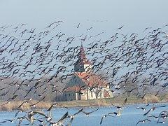 Ornitologové pozorují na Nových Mlýnech tisíce vodních ptáků.
