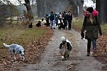 Chovatelé psů poslali materiální sbírku do útulků.