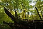 Oblast soutoku řek Moravy a Dyje bývá označována jako Moravská Amazonie.