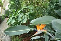 Do palmového skleníku u zámku v Lednici mohou lidé v těchto dnech nahlédnout pouze přes sklo. V lednu se jeho brány uzavřely, aby mohli zahradníci krásu rostlin opět oprášit.