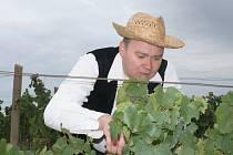 Mistrovství světa ve sbírání hroznů přilákalo přes dvě stovky účastníků.