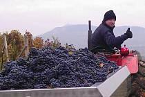 Třicet tisíc litrů vína vyrobí za rok Jiří Zámečník z Dolních Dunajovic. Zaměřuje se na jakostní, přívlastková, kabinetní, výběry či ledová. Zámečník, jenž v oboru podniká devět let, má sedmatřicet let, je ženatý a bezdětný. Spravuje tři hektary vinic.