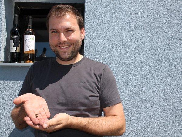 Vbřeclavském rodinném Vinařství na Soutoku lapili při stáčením vína do lahví neznámou černou vosu.