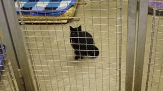 Černá kočička video galerie