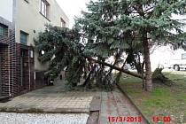 Vzrostlý smrk spadl na rodinný dům v Břeclavi.