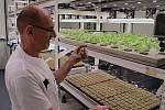 V Břeclavské Fosfě pěstují saláty bez pesticidů, v takzvané vertikální farmě.