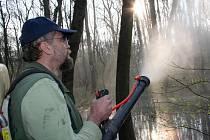 Lesníci začali ve spolupráci s břeclavskou radnicí v Kančí oboře poblíž břeclavského zámku bojovat s komářími larvami.