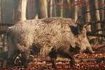 Fotografie Davida Mahovského na výstavě Historie a krásy lužních lesů jižní Moravy.