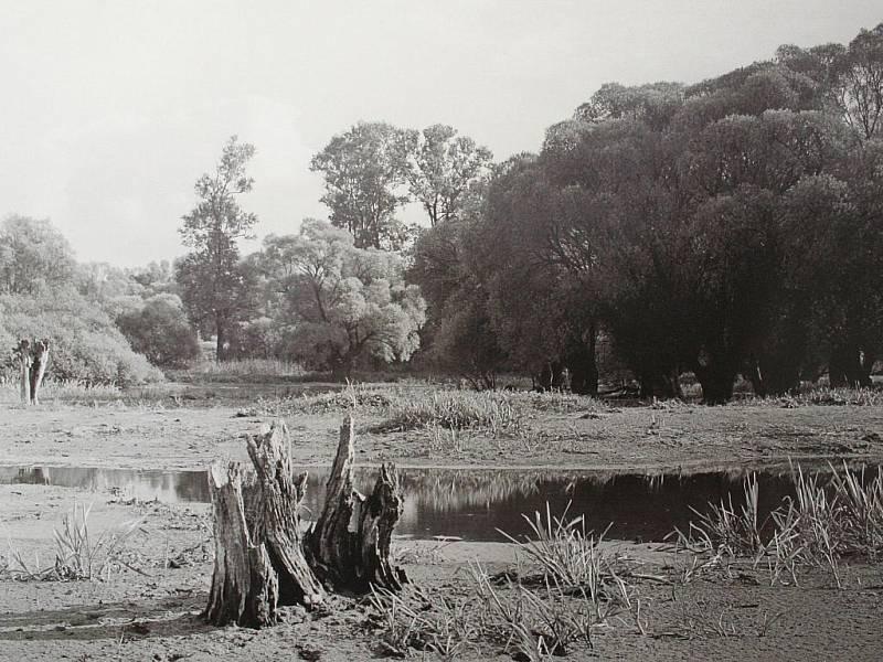 Fotografie Jarmily Kocourkové na výstavě Historie a krásy lužních lesů jižní Moravy.